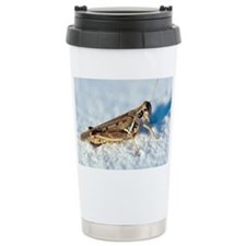 Desert locust, on white gypsum - Travel Mug