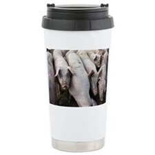 Pigs - Travel Mug