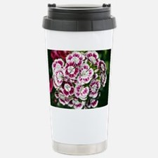 Sweet Williams (Dianthus sp.) - Travel Mug