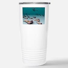 Trilobites - Travel Mug