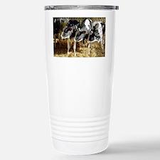 Young friesian dairy cows - Travel Mug