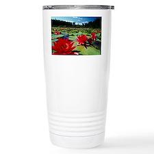 Large water lilies, Nymphaea - Travel Mug