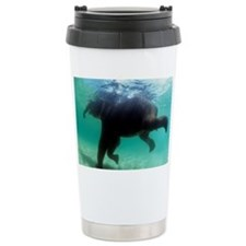 Asian elephant (Elephas maximus) - Travel Mug