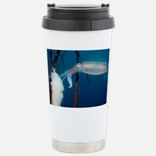Bigfin reef squid - Stainless Steel Travel Mug