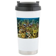 Coral reef community - Travel Mug
