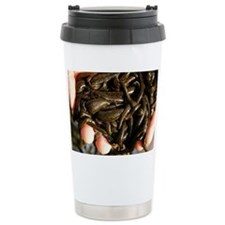 Cupped hands holding medicinal leeches - Travel Mug