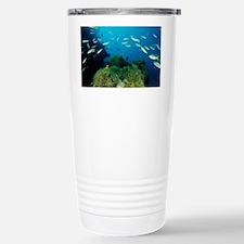 Fusilier fish - Stainless Steel Travel Mug