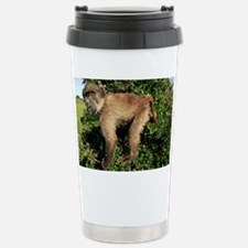 Juvenile chacma baboon - Thermos Mug