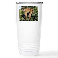 Juvenile chacma baboon - Travel Mug