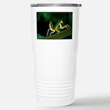 Praying mantis - Travel Mug