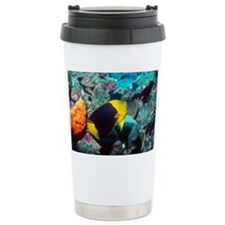 Rock beauty angelfish - Travel Mug