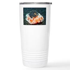 Umbraculum umbraculum sea slug - Travel Mug