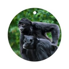 Colombian black-faced spider monkeys - Round Ornam