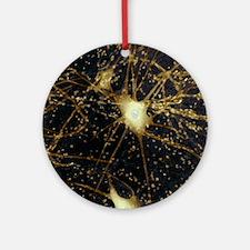 Motor neurons, light micrograph - Round Ornament
