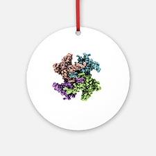 RNA processing protein, molecular model - Round Or