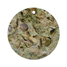 A mixed assemblage of fossils - Round Ornament