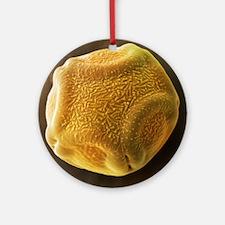 Alder tree pollen grain, SEM - Round Ornament