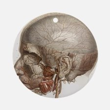 Head vascular anatomy, historical artwork - Round