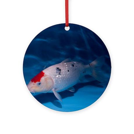 Sanke koi carp pool round ornament by sciencephotos for Pool of koi
