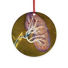 Kidney blood supply - Round Ornament