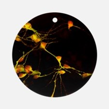 Nerve cell growth - Round Ornament