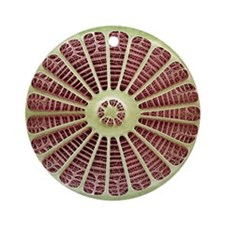 Diatom, SEM - Round Ornament