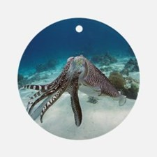Broadclub cuttlefish - Round Ornament
