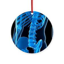 Lower spine, artwork - Round Ornament
