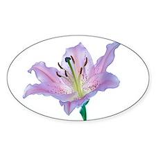 Lily (Lilium sp.) - Decal