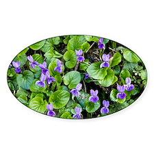 Viola odorata (Sweet Violets) - Decal