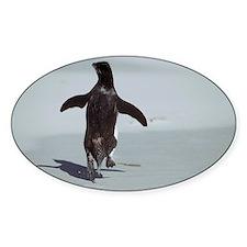 Western rockhopper penguin - Decal