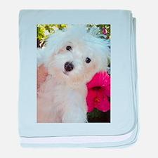 Adorable Ali - Maltese Puppy baby blanket