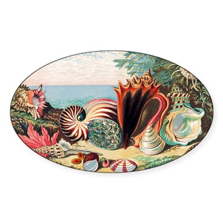 Sea shells - Sticker (Oval 50 pk)