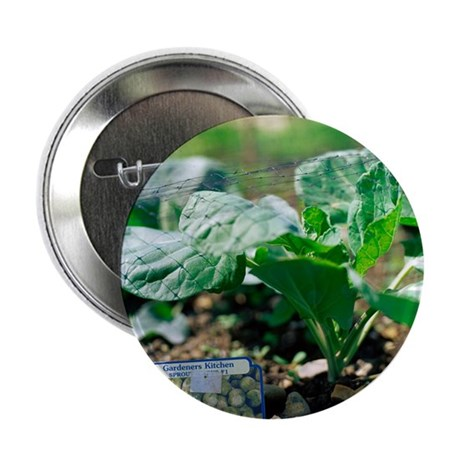 Brussels sprout plant - 2.25' Button (10 pack)