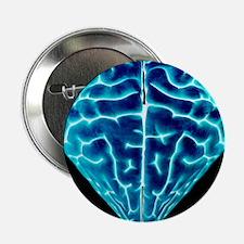 Heart-shaped brain, conceptual artwork - 2.25' But