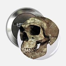Homo erectus skull - 2.25' Button (10 pack)