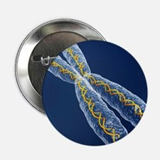 Chromosome with DNA - 2.25' Button (10 pack)