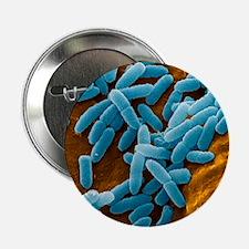 Pseudomonas aeruginosa bacteria, SEM - 2.25' Butto