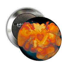 Supernova explosion - 2.25' Button (10 pack)