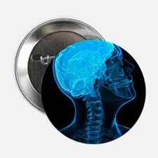 Head anatomy, artwork - 2.25' Button (10 pack)