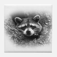 Raccoon in Tree Tile Coaster