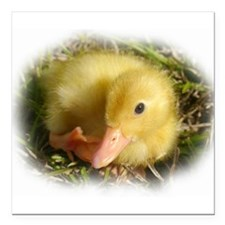 """Baby Duckling Square Car Magnet 3"""" x 3"""""""