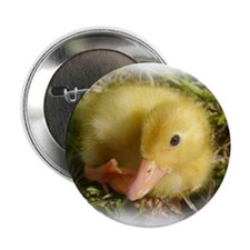 """Baby Duckling 2.25"""" Button"""