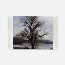 Peaceful Willow Tree Rectangle Magnet