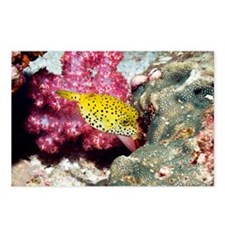 Yellow boxfish - Postcards
