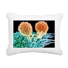 T lymphocytes and cancer cell, SEM - Rectangular C