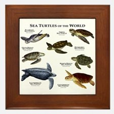 Sea Turtles of the World Framed Tile