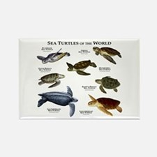 Sea Turtles of the World Rectangle Magnet