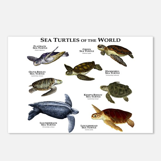 Sea Turtles of the World Postcards (Package of 8)