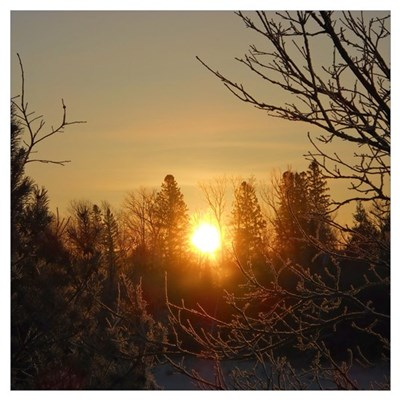 Sunrise in the Trees Wall Art Canvas Art